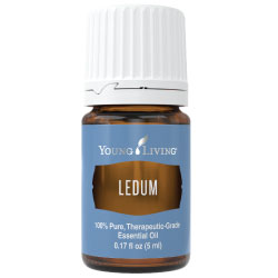 Buy Ledum Essential Oil Here!